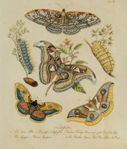 LSC Butterfly